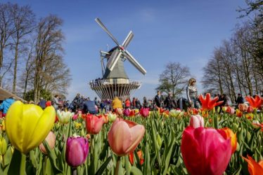 Keukenhof is a great day trip from Haarlem to see Dutch tulips.