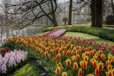 Flowers abound at Keukenhof.